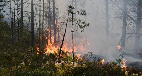 Bildresultat för skogsbrand